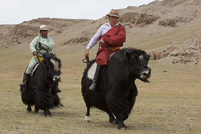 mongolia events and festivals